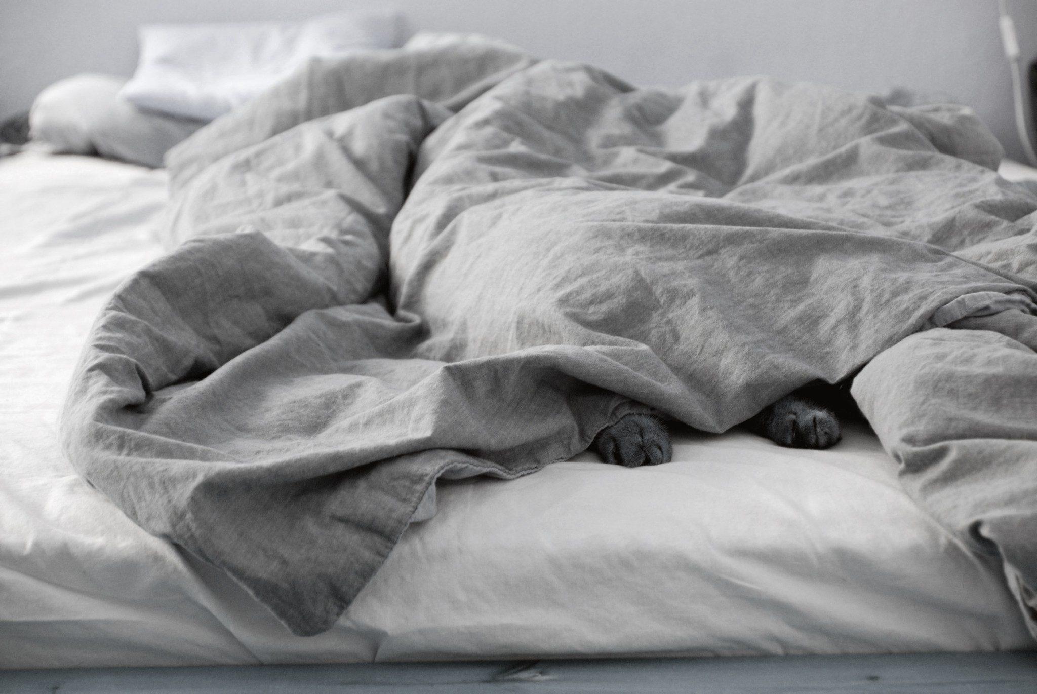 Warum Haustiere mit ins Wasserbett dürfen. - BluTimes Wasserbetten
