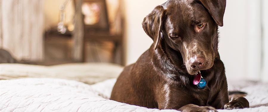 Haustiere im Wasserbett, Hund schläft im Bett